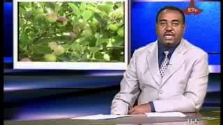 Ethiopia ETV Amharic News April 08 2013