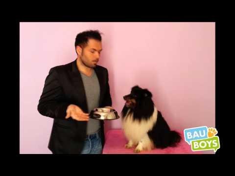 cani e gatti - cibo secco o umido?