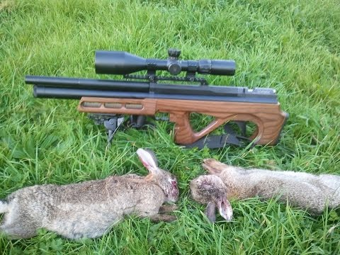 Edgun Matador Long Range Rabbit control (видео)