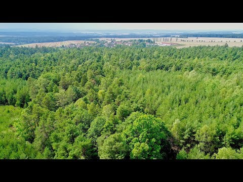 Above Dense Forests DJI Phantom 4 Pro