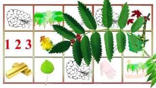 Живые мнемотаблицы. Осенние листья