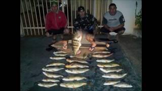 Pintados, Dourados , curimba, Pesca Sub 2011