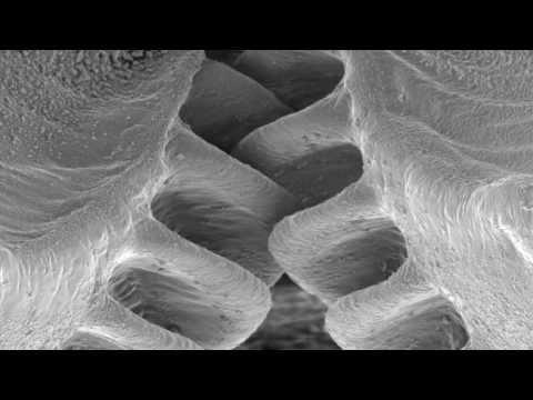 科學家們首次在這隻昆蟲體內發現「有齒輪」,原本已驚呆的我再瞭解其作用後覺得人類弱爆了!