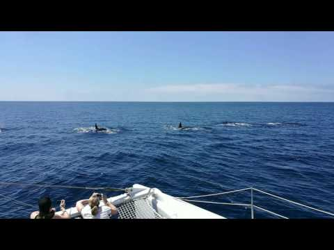killer whales on FTV