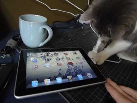ipads - my cat enjoys the future! Iggy is 6 year old male cat, who has always been exceedingly curious and technologically inclined. the screen is fine! cat's claws ...
