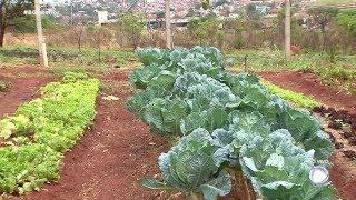 Horta gera renda e incentiva alimentação saudável em condomínio