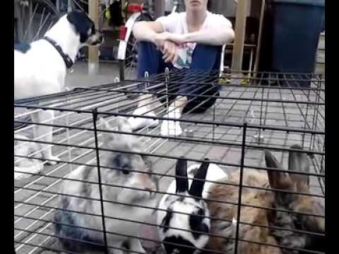 honden en konijnen deel 1