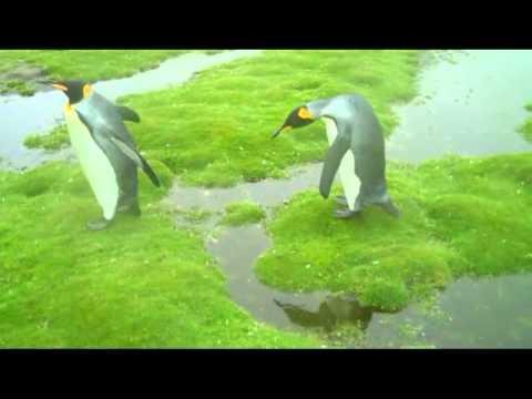 The Penguin Dilemma