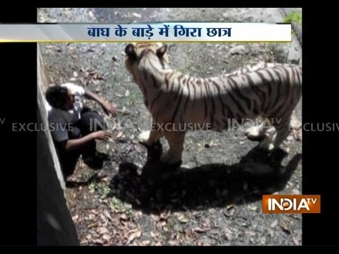 Indian youth - Subscribe to Official India TV YouTube channel here: http://goo.gl/5Mcn62 Youth mauled to death by white tiger at Delhi Zoo Social Media Links: Facebook : ht...