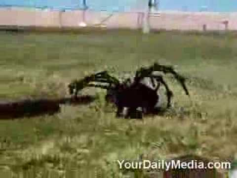 Spider Dog
