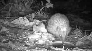 Wildlife Trail Camera - 12.11.2016