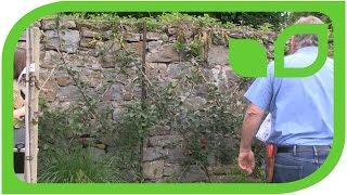 Führung mit Markus Kobelt: Die Redlove-Apfelhecke auf Schloss Ippenburg