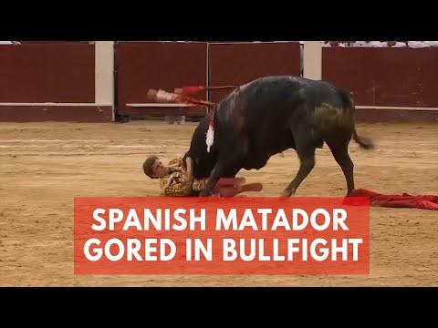 العرب اليوم - فيديو الماتدور الإسباني يحبس الأنفاس في حلقات مصارعة الثيران