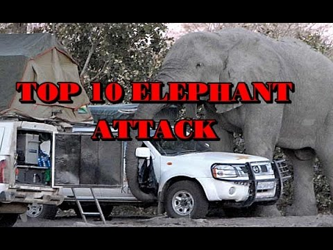 Download Top 10 Elephant Attack Videos - So Dangerous!!!! HD Mp4 3GP Video and MP3