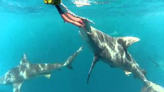 Weipa Australia  city images : Shark Feeding off the coast of Weipa northern Australia (Crazy)