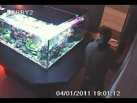 Coral thief hits local utah fish store for Fish stores in utah