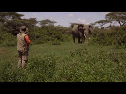 Arthur L'aventurier en Afrique