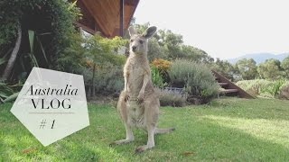 Yarra Valley Australia  city pictures gallery : Australia Vlog | Part 1: Melbourne + Yarra Valley