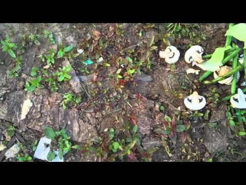 Hunting or Attracting Red Wiggler Worms Redworms – BroBryceGardens