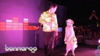 Танцующая собака по кличке Керри