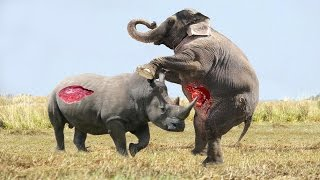 Elephant vs Rhino Real Fight - Animal World - Animals Fight