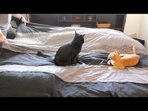 rifare il letto con dei gatti intorno è una missione impossibile!