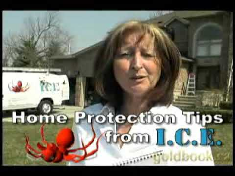 Pest Control and Humane Animal Removal in Toronto Ontario
