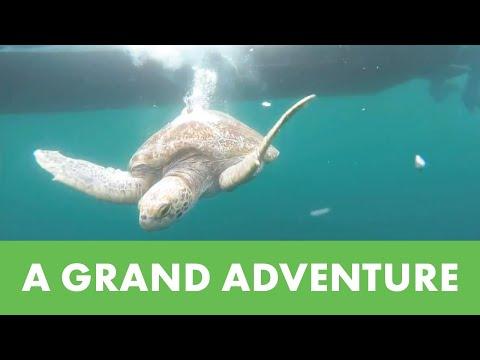 Kleine ukjes worden groot, 15 groene schildpadden teruggezet