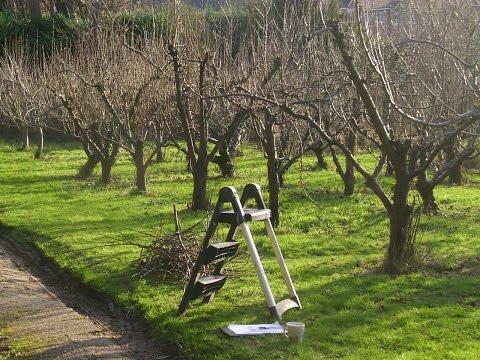Обрезка яблони когда и как правильно ее делать - 0