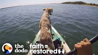 Dog Abandoned On A Desert Island Rescued | The Dodo Faith=Restored by The Dodo