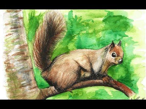 Drawing a squirrel with watercolor - Dibujando una ardilla en acuarela (видео)