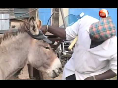 Meet Boy, The Donkey Who Lives Like A King
