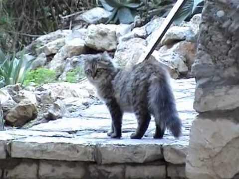 חתולי רחוב – האם הם מטרד