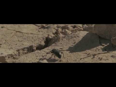 "Xenon – ""Bienvenidos al desierto"" [Videoclip]"