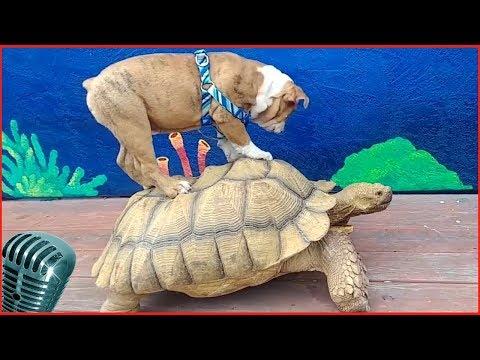смешные животные и природа 4 наш ббс