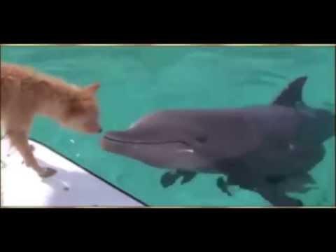 Un chien sauvé des requins par un dauphin
