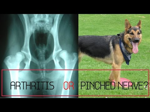 My Dog Has What?  Arthritis OR Pinched Nerve