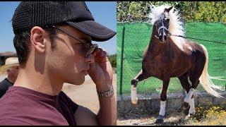 Video HORSE SHOPPING FOR A BEAUTIFUL STALLION MP3, 3GP, MP4, WEBM, AVI, FLV Juni 2019