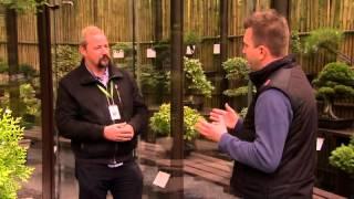 Bonsai fák gondozása és nevelése - Kertbarátok - Kertészeti TV - műsor