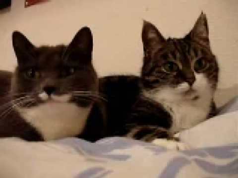 due gatti comunicano tra di se in una lingua tutta particolare!