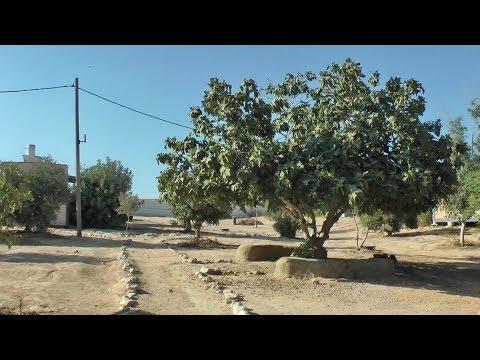 כרמים – קבוץ אקולוגי, פלורליסטי, מתחדש