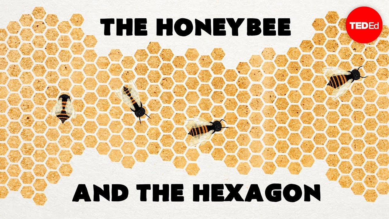 Video: Why do bees make honeycombs out of hexagons?