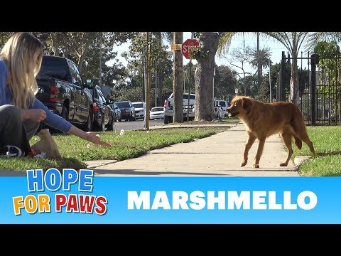 Marshmello was alone on the streets but too afraid to ask for help.