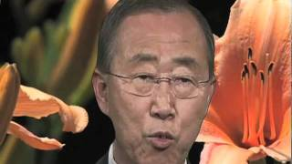 United Nations, New York - Secretary-General Ban Ki-moon today voiced concern over alarming deforestation and the ...