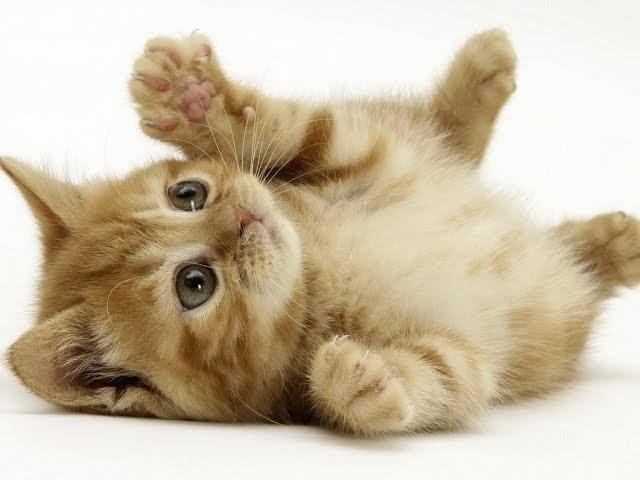 かわいい猫動画集