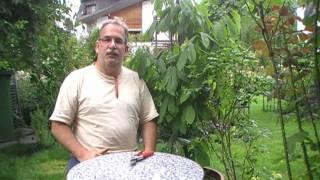 #2 Die Befruchtung bei den Heidelbeeren und weitere Heidelbeertipps