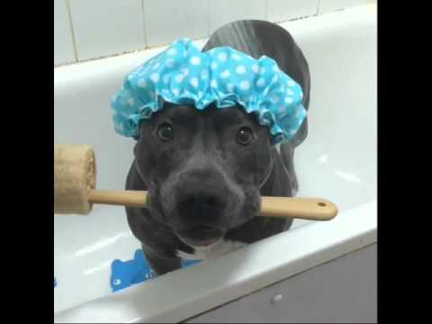 Собака принимает душ