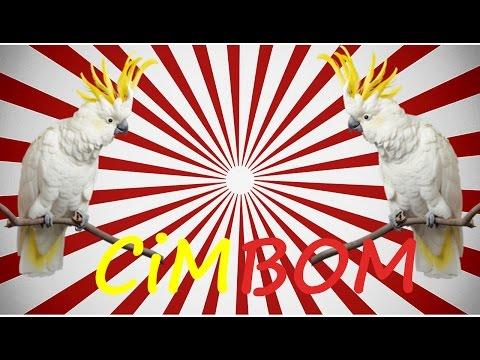 Video muhabbet kuşu nasıl konuşturulur CİMBOM Sesi hazır ses kaydı 1 saat download in MP3, 3GP, MP4, WEBM, AVI, FLV January 2017