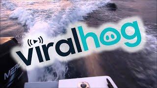Des orques suivent le bateau de deux pêcheurs