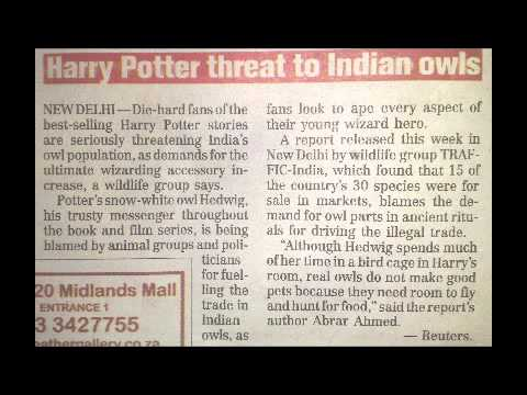0 Is Harry Potter Responsible for the Decline of Owls in India? picture